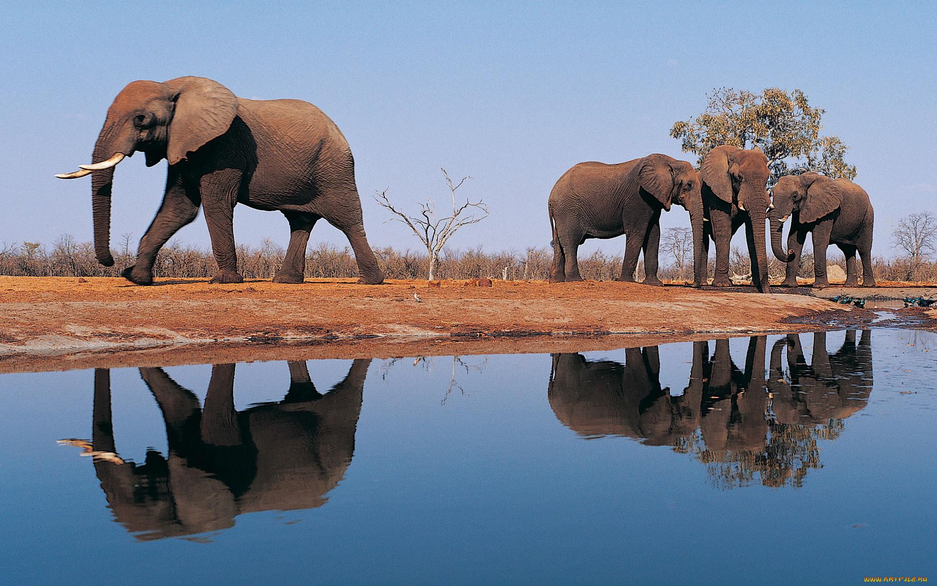 картинки к презентации слоны керамическая